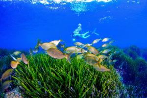 Underwater diving on Costa Cálida