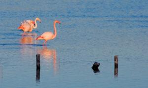 Birdwatching in Murcia